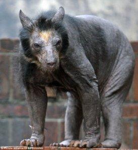 bare-bear-1