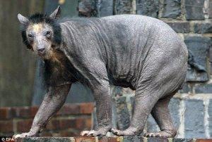 bare-bear-3