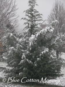 Our Tree this Winter