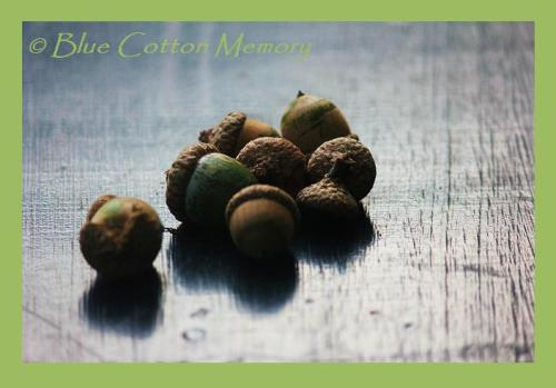 Acorns found on the path during an anniversary trip