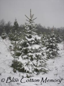 christmastree8c