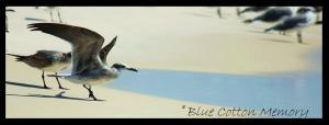 birdwings23c