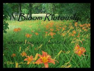 bloomriot
