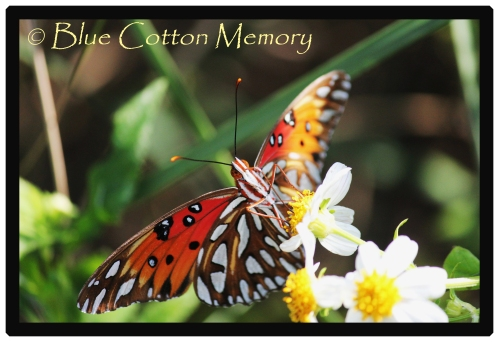 butterfly62_edited-2