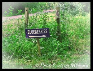 blueberries22c2