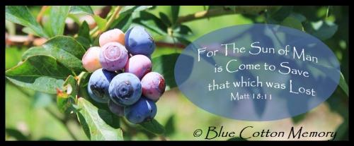 blueberry2013c31