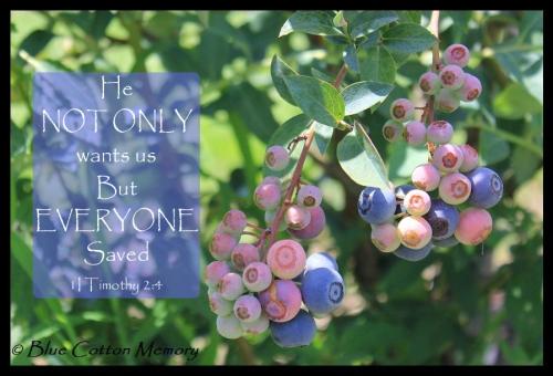 blueberry2013c5c