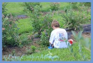 blueberrysum13