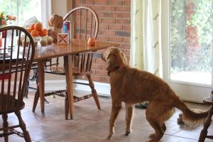 Sadie wanting a pumpkin cupcake