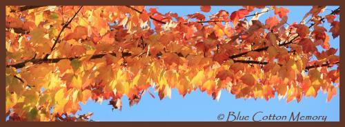 leaflimb