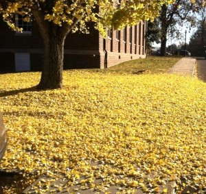 yellowleaves2