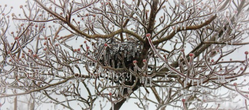 icetreebuds