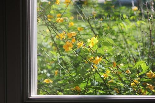 flower222view