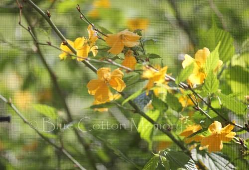 yellow view