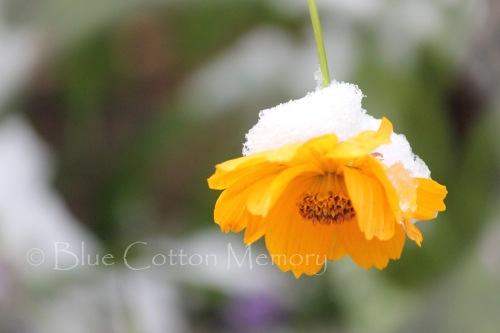 snowcosmo22_edited-1