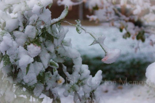 snowzinnia44_edited-1