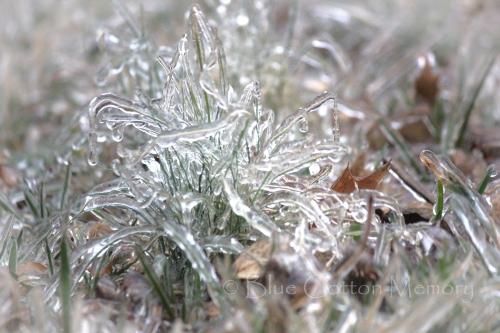 icegrass2c_edited-2