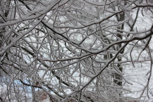 snow201516c_edited-1