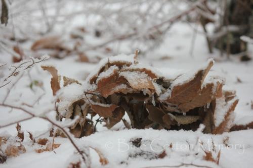snow201519c_edited-1