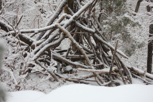 snow20159c_edited-1