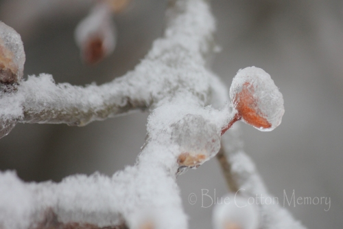 snowbudc_edited-1
