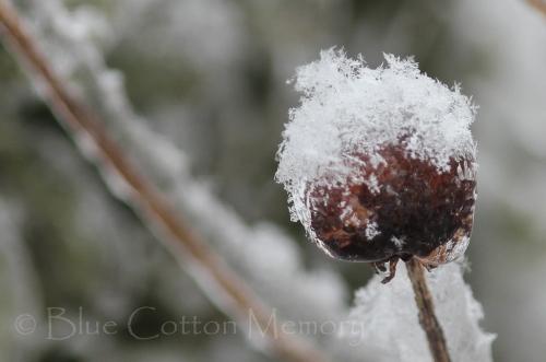 snowbudsc_edited-1