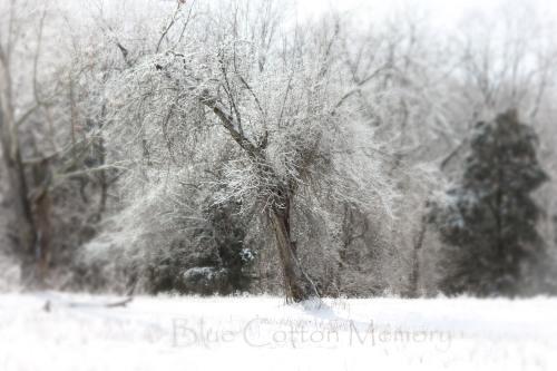 snowicetree_edited-1