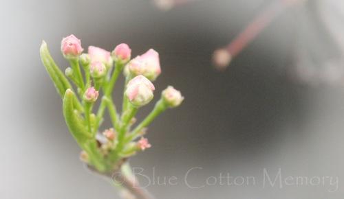 springbuds14_edited-1