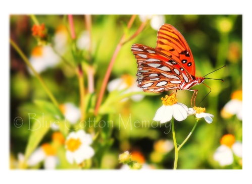 butterflyoriginial_edited-2