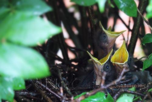 babybird2_edited-1