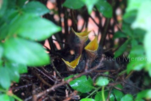 babybird_edited-1