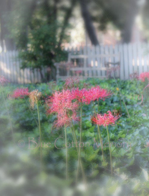 pinkfl1522_edited-2