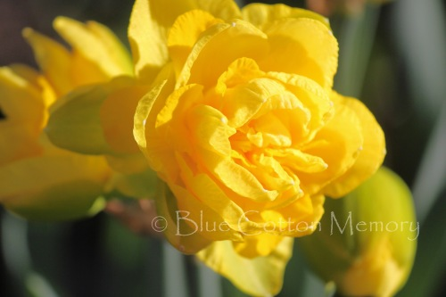 yellowdaffy_edited-1