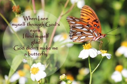butterflyc716