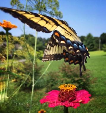 butterfly17ac