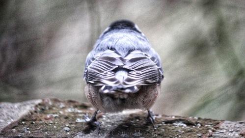 birdc.jpg