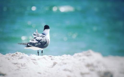 beachbirdcc